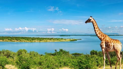 Giraffe-at-Nile-River-1024x576.jpg